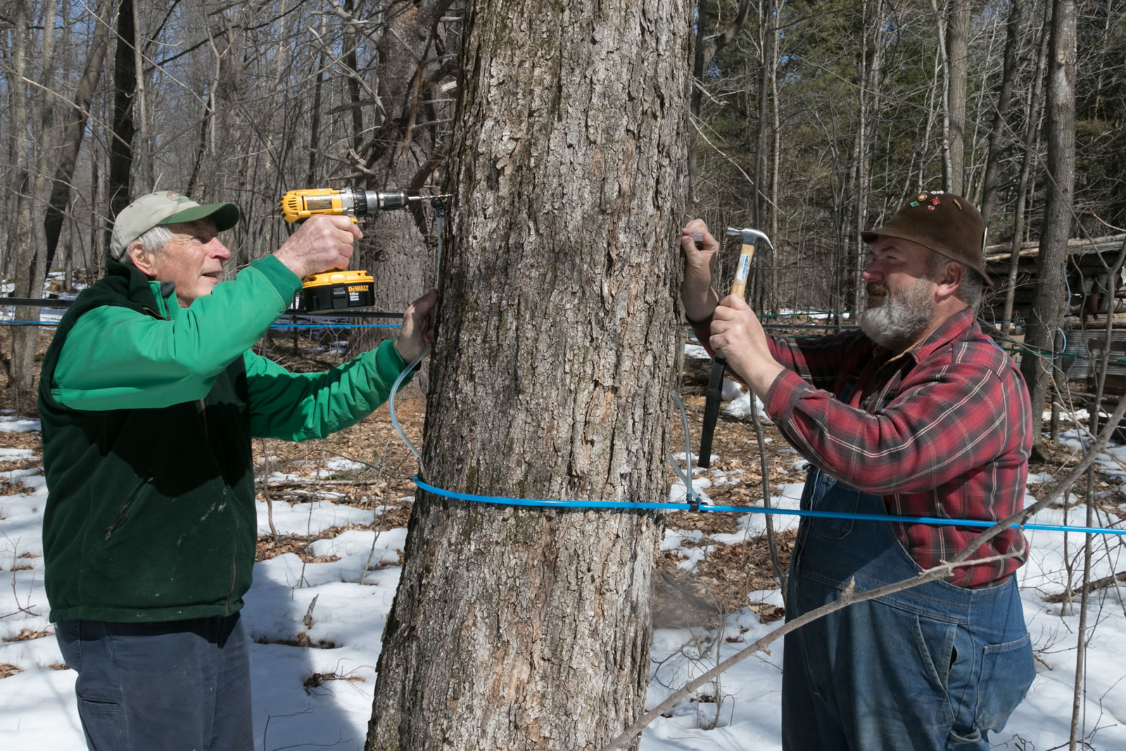 784871019b8 About Maple Syrup – Fortune Farms