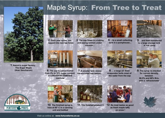 Maple syrup flow chart